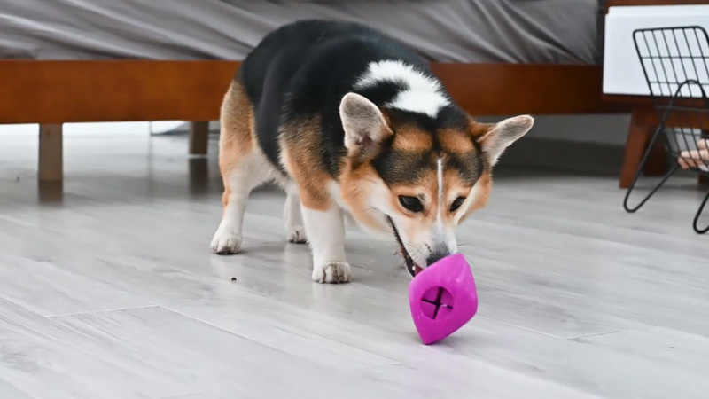 Interactive Chew Dog Toys Introduction